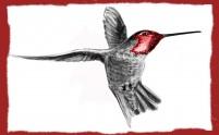 colibrisito (3)