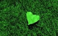 cuore san vitale (1)